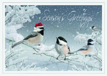 Red-Capped Chickadee Holiday Cards